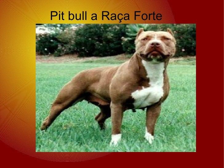 Pit bull a Raça Forte