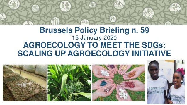 1 Brussels Policy Briefing n. 59 15 January 2020 AGROECOLOGY TO MEET THE SDGs: SCALING UP AGROECOLOGY INITIATIVE