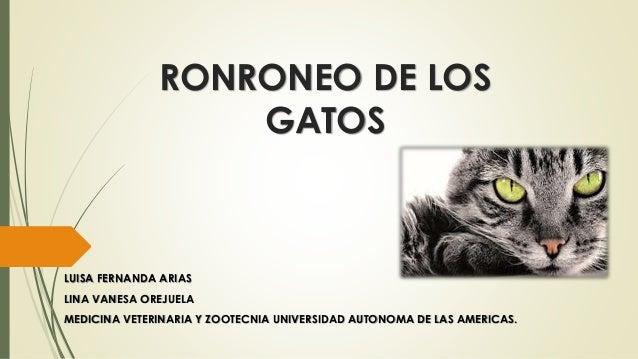 RONRONEO DE LOS GATOS LUISA FERNANDA ARIAS LINA VANESA OREJUELA MEDICINA VETERINARIA Y ZOOTECNIA UNIVERSIDAD AUTONOMA DE L...