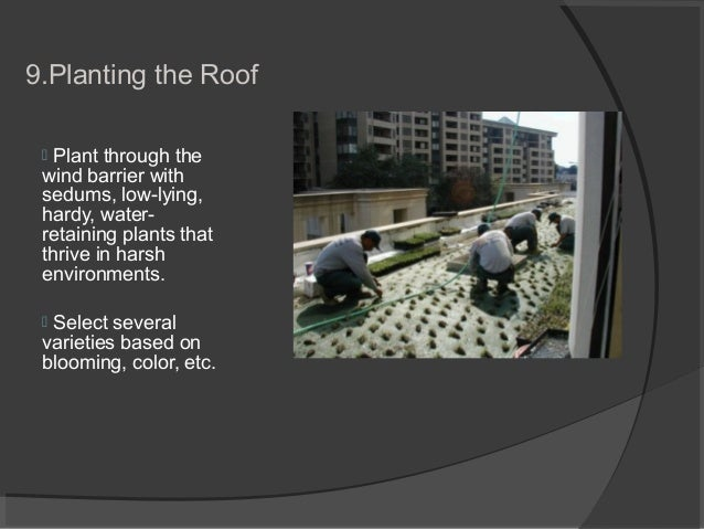 9.Planting the Roof  Plant through the wind barrier with sedums, low-lying, hardy, water- retaining plants that thrive in...