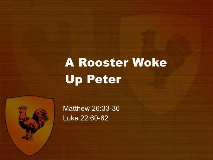 A Rooster Woke  Up Peter Matthew 26:33-36 Luke 22:60-62