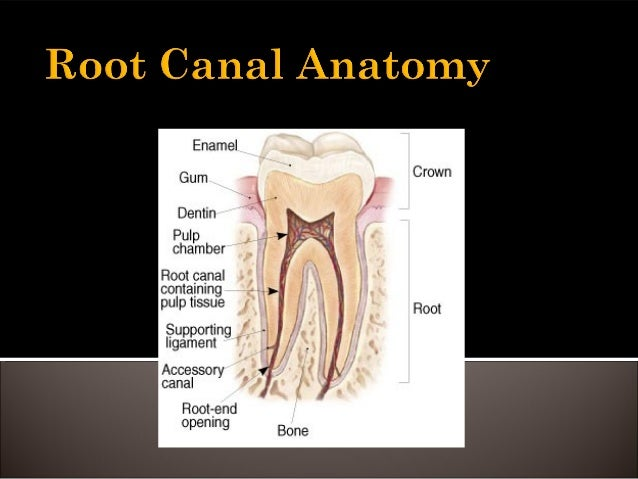 Root canal anatomy and access cavities