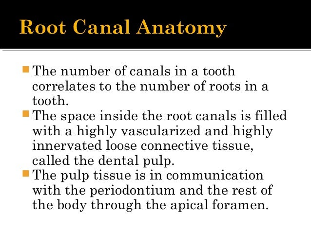  Central region contains nerves and blood vessels.  Innermost layer, - contains fibroblasts and undifferentiated mesench...