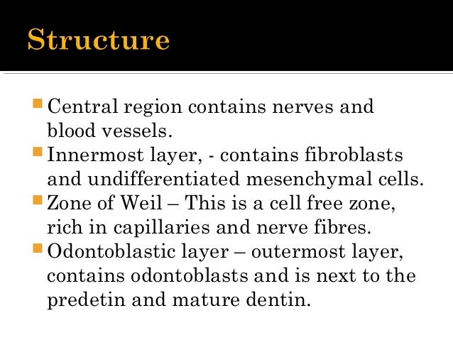  Primary Function is to form Dentin  Nutritive – provides nutrients to the organic surroundings  Sensory – sensitive to...