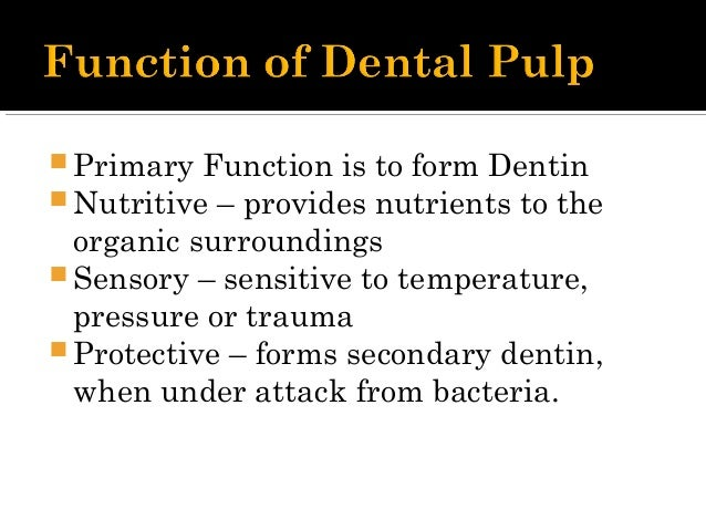  Accessory canals are branches of the main canal that form a communication between the pulp and periodontum.  They also ...
