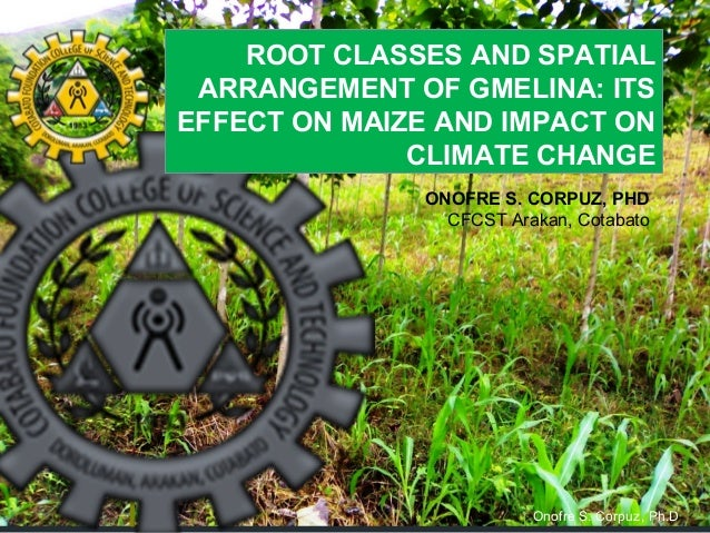 ROOT CLASSES AND SPATIAL ARRANGEMENT OF GMELINA: ITS EFFECT ON MAIZE AND IMPACT ON CLIMATE CHANGE ONOFRE S. CORPUZ, PHD CF...