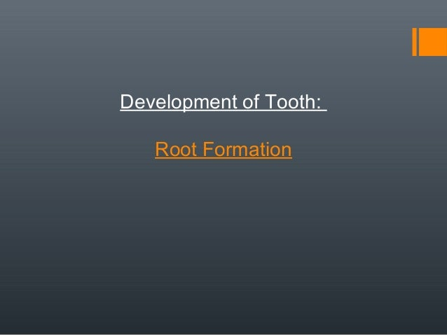 Development of Tooth: Root Formation