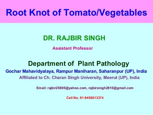 Root Knot of Tomato/Vegetables DR. RAJBIR SINGH Assistant Professor Department of Plant Pathology Gochar Mahavidyalaya, Ra...