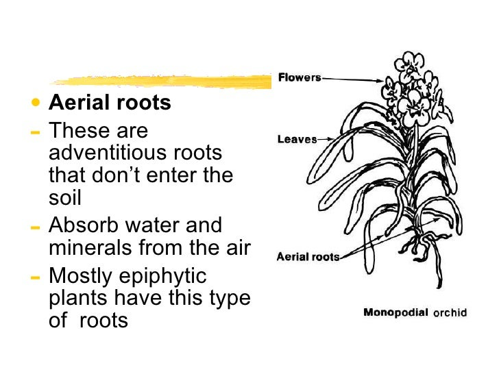 Roots 28 ccuart Image collections
