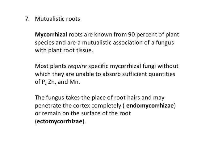 mutualistic relationship fungi and root hairs absorb