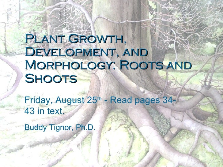 Plant Growth, Development, and Morphology: Roots and Shoots Friday, August 25 th  - Read pages 34-43 in text. Buddy Tignor...