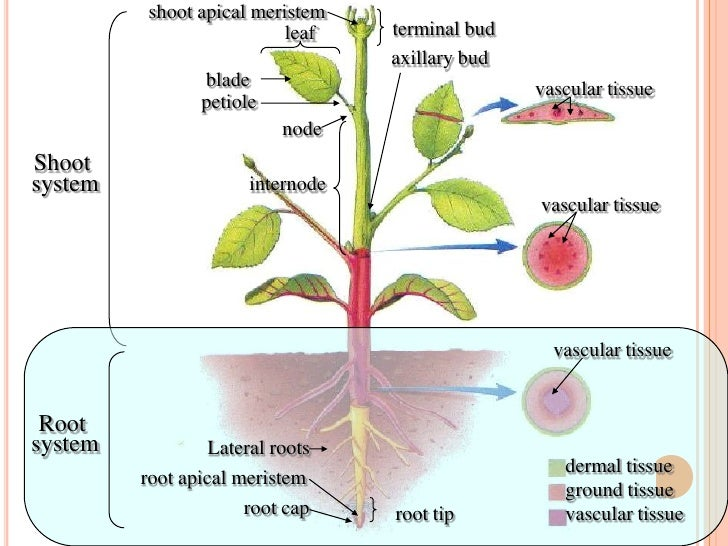 Roots Postlab  Roots Postlab
