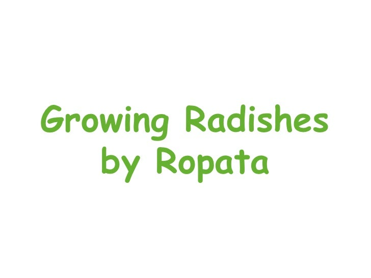 Growing Radishes by Ropata