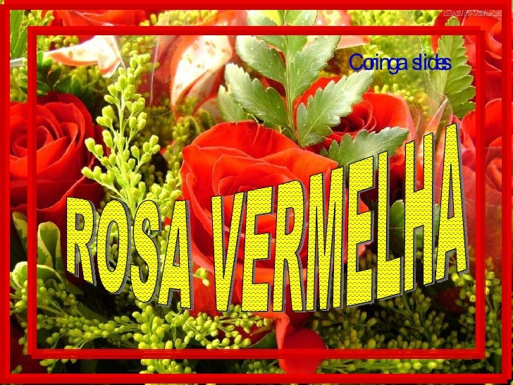 ROSA VERMELHA Coringa  slides