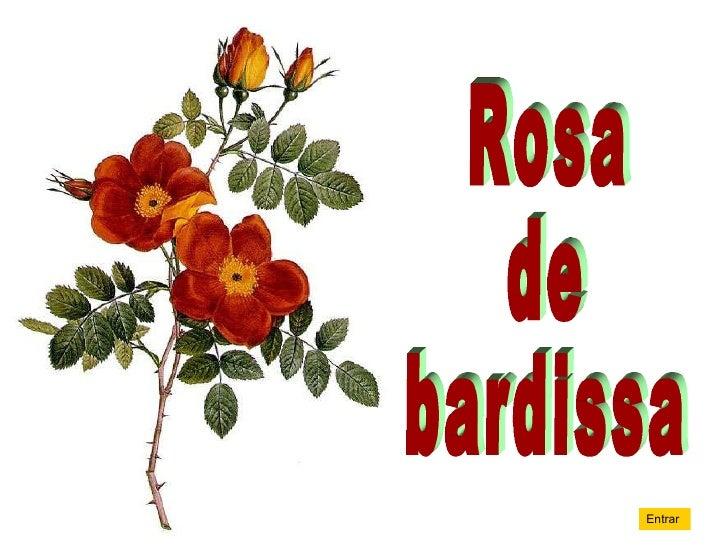 Rosa de bardissa Entrar