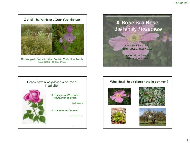 11/2/2013  Out of the Wilds and Into Your Garden  A Rose is a Rose: the family Rosaceae  C.M. Vadheim and T. Drake CSUDH &...