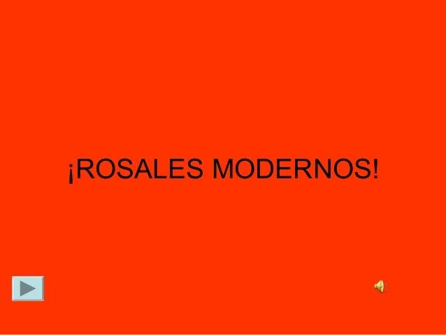 ¡ROSALES MODERNOS!