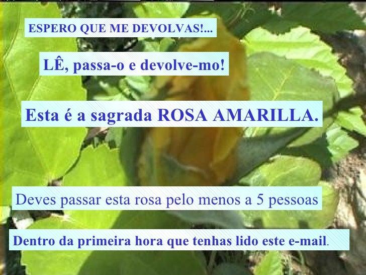 ESPERO QUE ME DEVOLVAS!... LÊ, passa-o e devolve-mo! Esta é a sagrada ROSA AMARILLA. Deves passar esta rosa pelo menos a 5...