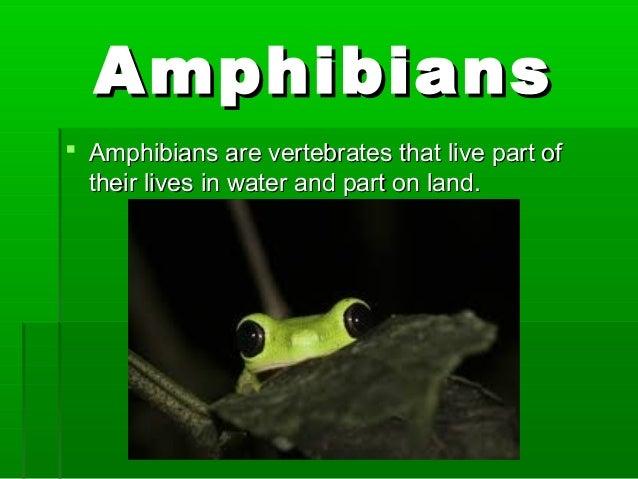 AmphibiansAmphibians  Amphibians are vertebrates that live part ofAmphibians are vertebrates that live part of their live...