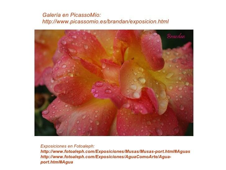Galería en PicassoMío: http://www.picassomio.es/brandan/exposicion.html     Exposiciones en Fotoaleph: http://www.fotoalep...