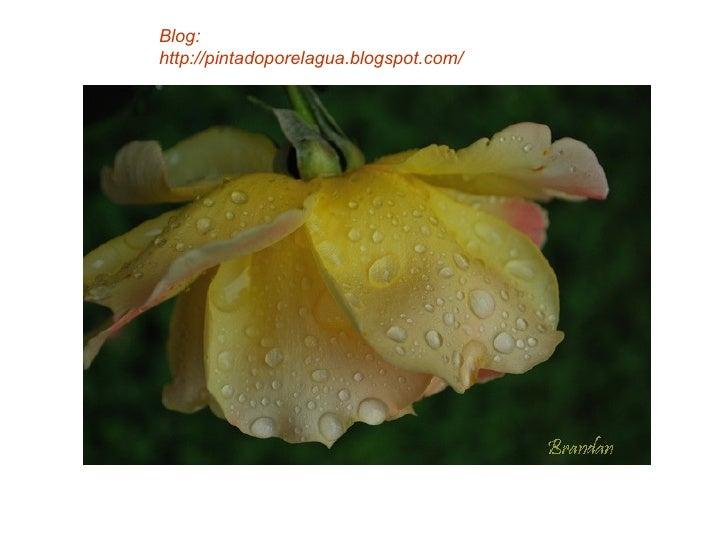 Blog: http://pintadoporelagua.blogspot.com/