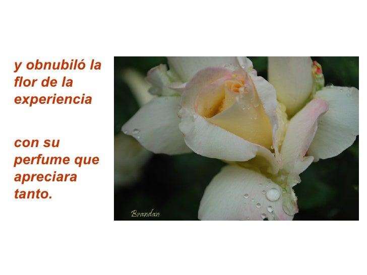 y obnubiló la flor de la experiencia   con su perfume que apreciara tanto.