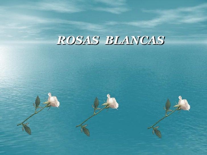 ROSAS BLANCAS     .