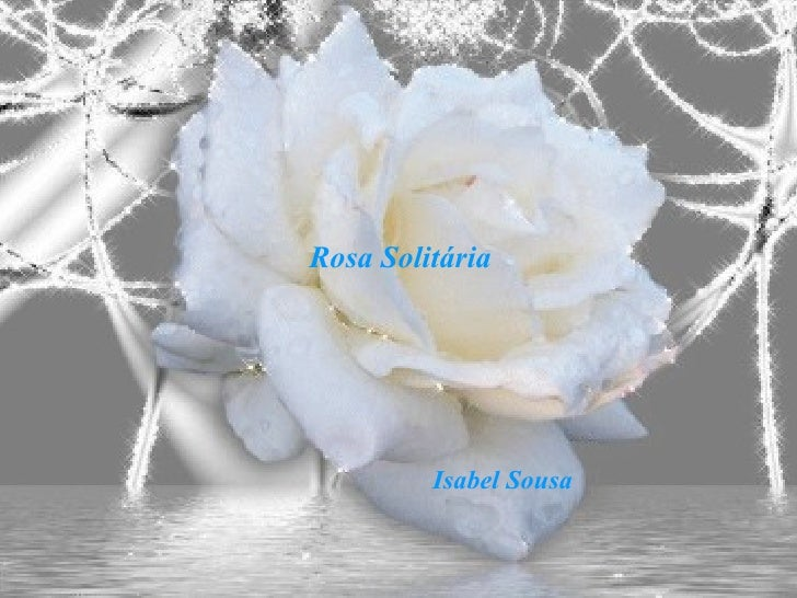 Rosa Solitária Isabel Sousa