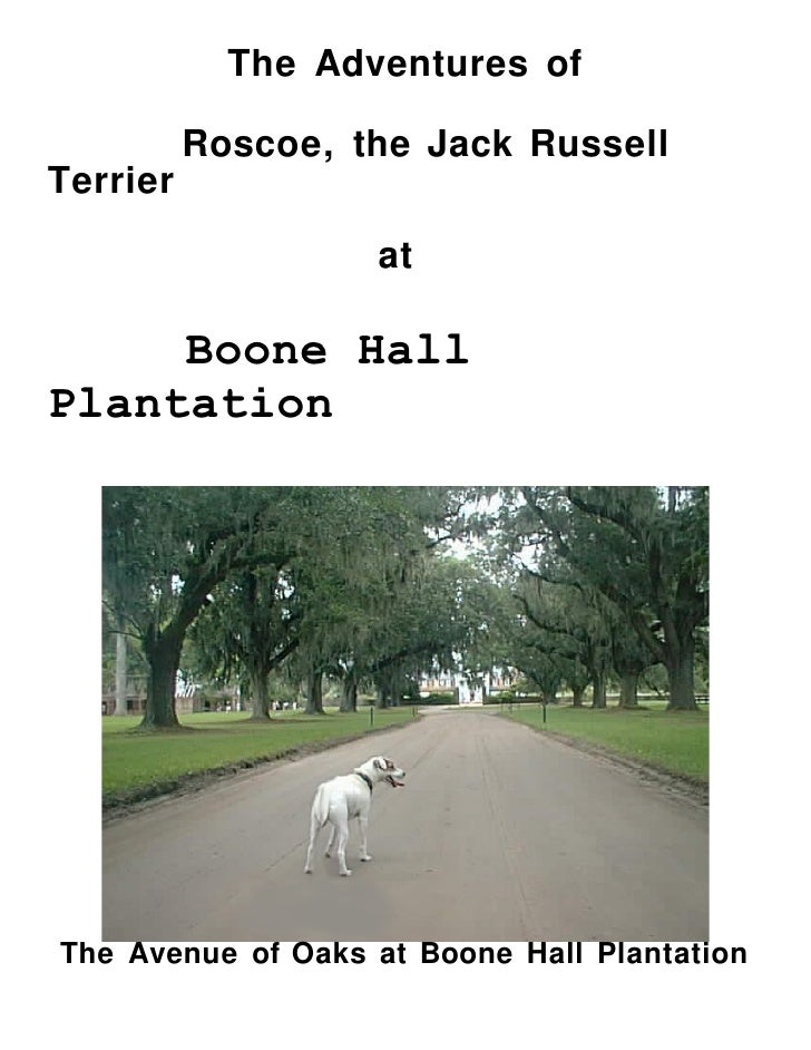 The Adventures of   Roscoe, the Jack Russell Terrier                       at    Boone Hall Plantation     The Avenue of O...