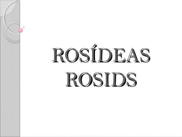 ROSÍDEASROSÍDEAS ROSIDSROSIDS