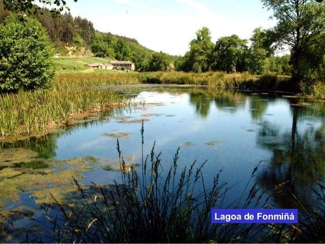 Lagoa de Fonmiñá