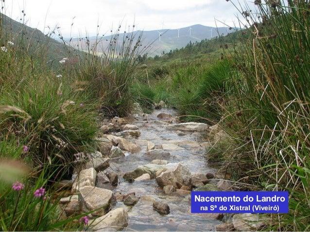 Nacemento do Landro  na Sª do Xistral (Viveiró)