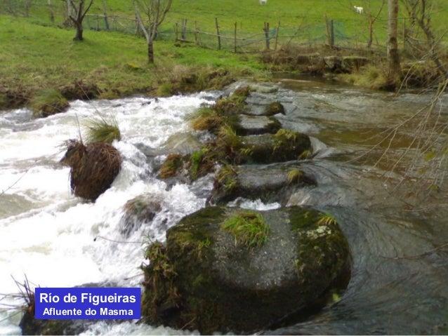 Río de Figueiras  Afluente do Masma