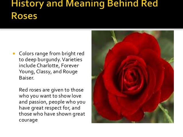Rose Colour And Meanings A Lecture By Mr Allah Dad Khan Visiting Pr