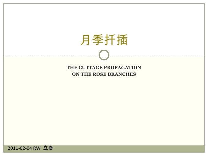 月季扦插 The Cuttage Propagation on the Rose Branches 2011-02-04 RW  立春