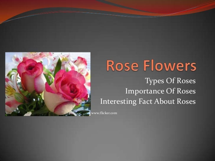 Types Of Roses             Importance Of Roses     Interesting Fact About Roseswww.flicker.com