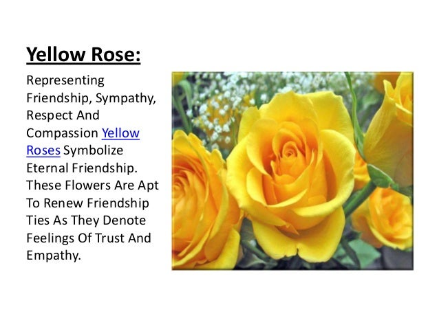 Rose its colors and numbers yellow mightylinksfo