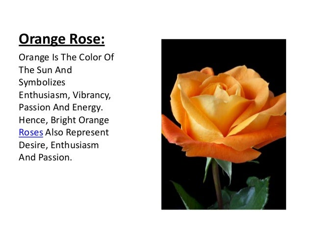Rose its colors and numbers for The meaning of orange roses