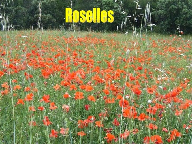 Roselles