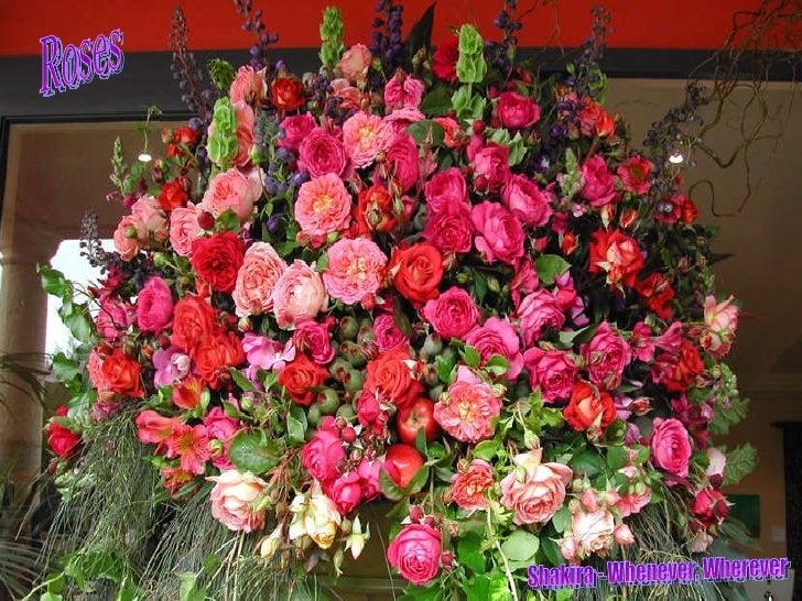 Roses Shakira - Whenever, Wherever