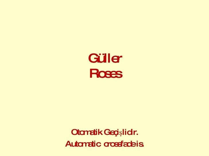 Güller Roses Otomatik Geçişlidir. Automatic  crossfade is.