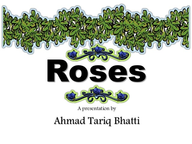 Roses     A presentation byAhmad Tariq Bhatti