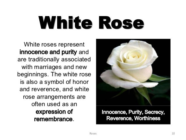What do roses represent