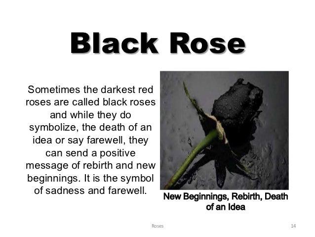 What does a black rose symbolise hookup website for Do black roses really exist
