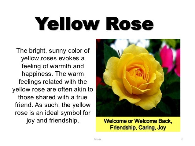 Roses yellow mightylinksfo