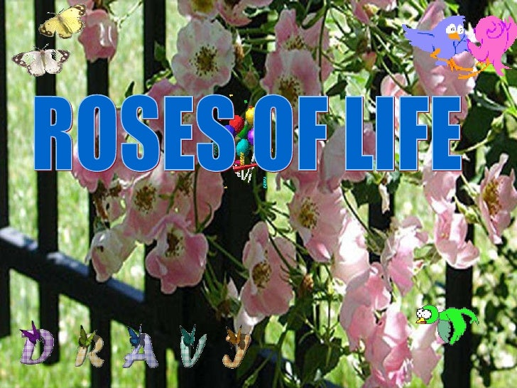 ROSES OF LIFE