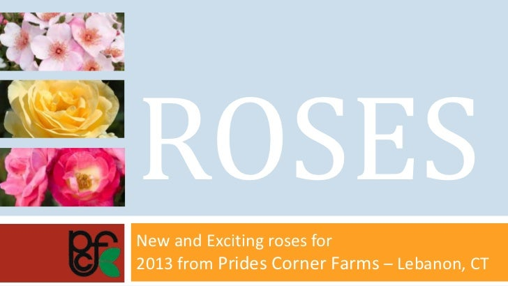 ROSESNew and Exciting roses for2013 from Prides Corner Farms – Lebanon, CT