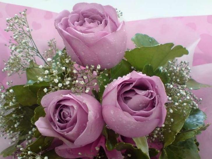 Rosy inspiration