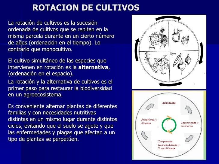 Rotacion de cultivos for Que es la asociacion de cultivos