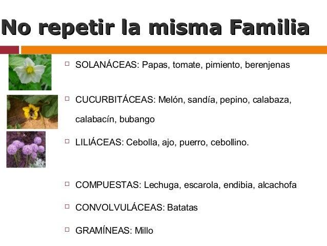 Rotaci n de cultivos en agricultura ecol gica for Asociacion de cultivos tomate